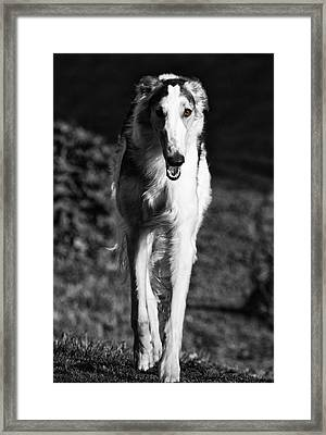 Borzoi Sigh Hound Dog Framed Print by Christian Lagereek