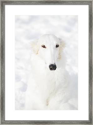 Borzoi White Lightning Framed Print by Christian Lagereek