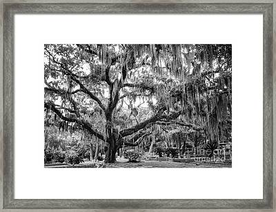 Bosque Bello Oak Framed Print by Dawna  Moore Photography