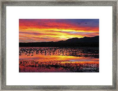 Bosque Sunset II Framed Print by Steven Ralser