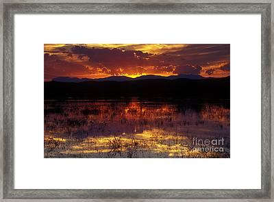 Bosque Sunset - Orange Framed Print by Steven Ralser