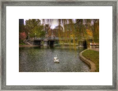 Boston Public Garden Swans Framed Print by Joann Vitali