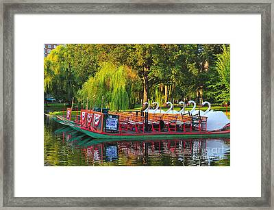 Boston Swan Boats Framed Print by Catherine Reusch  Daley