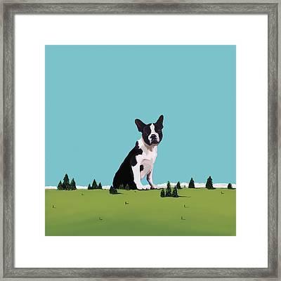 Boston Terrier Framed Print by Marjorie Weiss