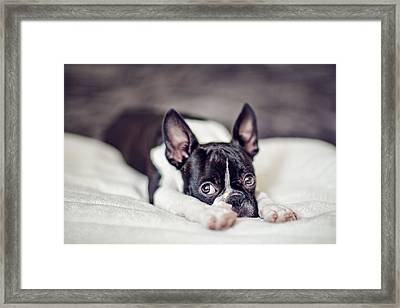 Fina Framed Print by Nailia Schwarz