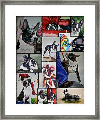 Boston Terrier Watercolor Collage Framed Print by Susan Herber