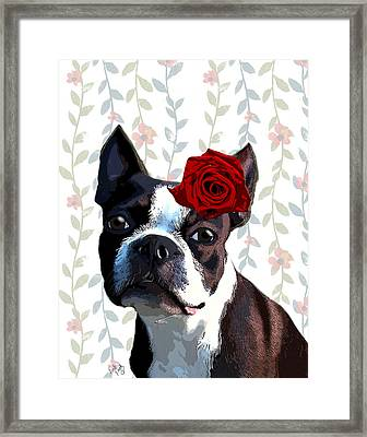 Boston Terrier With A Rose On Head Framed Print by Kelly McLaughlan