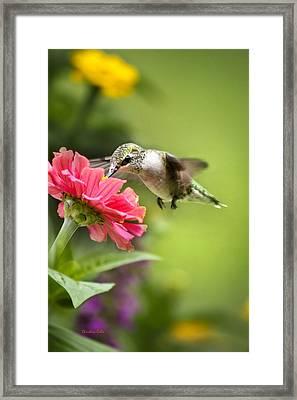 Botanical Hummingbird Framed Print by Christina Rollo