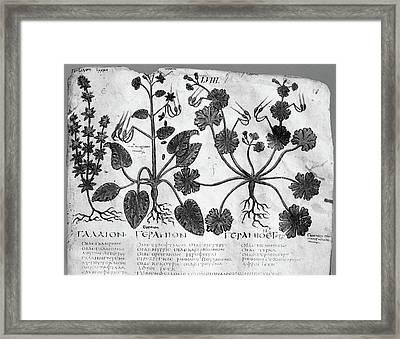 Botany Herbal Plants Framed Print by Granger