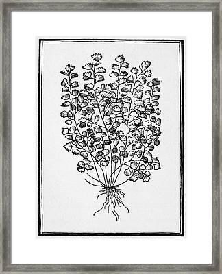 Botany Maidenhair Fern Framed Print by Granger