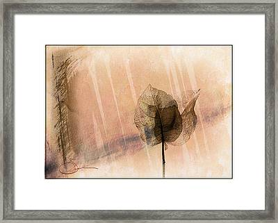 Bougainvillea 3 Framed Print by Robert Smith