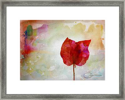 Bougainvillea 4 Framed Print by Robert Smith