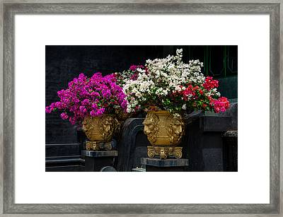 Bougainvillea At The Entrance Of Golden Temple In Dambulla  Framed Print by Jenny Rainbow