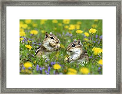 Bountiful Generosity Framed Print by Christina Rollo