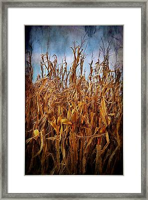 Bountiful Harvest Framed Print by Julie Dant