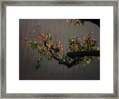 Bouquet From Autumn Leaves.three. Framed Print by Viktor Savchenko