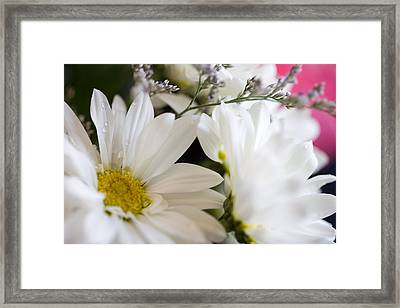 Bouquet Of Daisies Framed Print by John Holloway