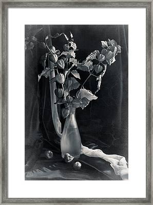 Bouquet Of Physalis Framed Print by Sviatlana Kandybovich