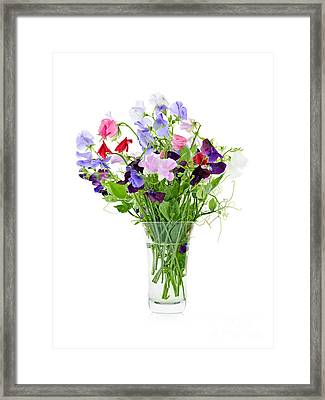 Cultivated Framed Print featuring the photograph Bouquet Of Sweet Pea Flowers by Elena Elisseeva
