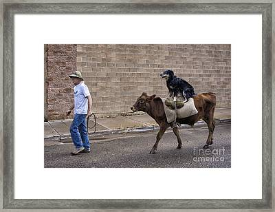 Bovine Riding Canine Framed Print by Priscilla Burgers