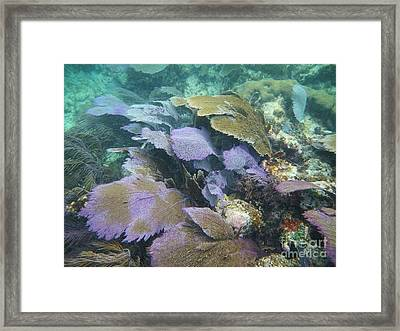 Bowing To The Sea Framed Print by Adam Jewell