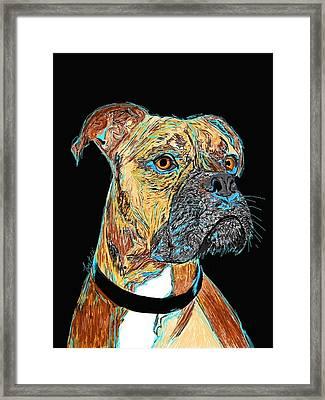 Boxer - Bud Framed Print by Bert Hornbeck