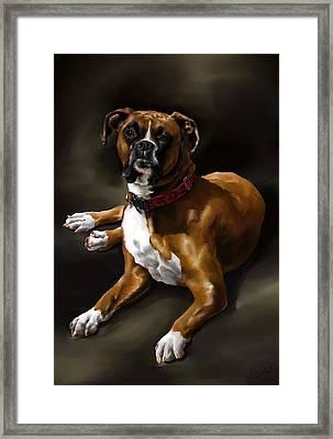 Boxer Framed Print by Cassandra Gallant