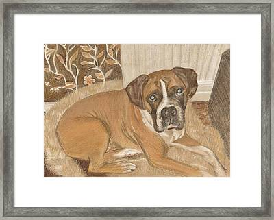 Boxer Dog George Framed Print by Faye Giblin
