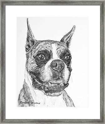 Boxer Dog Sketch Framed Print by Kate Sumners