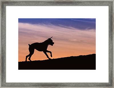Boxer Dog Sunset Silhouette Framed Print by Stephanie McDowell