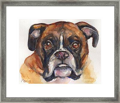 Boxer Dog Watercolor Framed Print by Maria's Watercolor