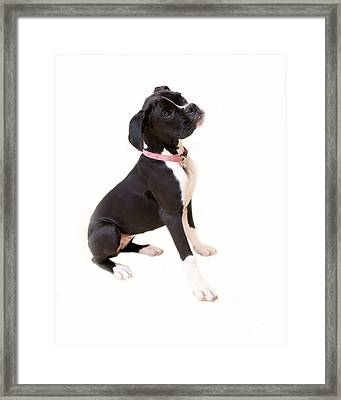 Boxer Girl 1 Framed Print by Rebecca Cozart