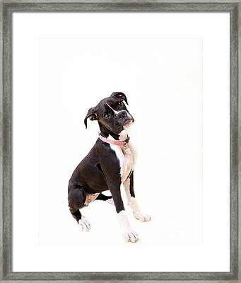 Boxer Girl 2 Framed Print by Rebecca Cozart