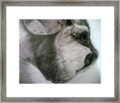 Boxer  Framed Print by Kelly Brown