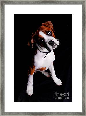 Boxer Pup Framed Print by Jt PhotoDesign