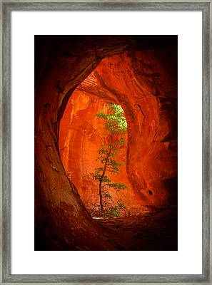 Boynton Canyon 04-343 Framed Print by Scott McAllister