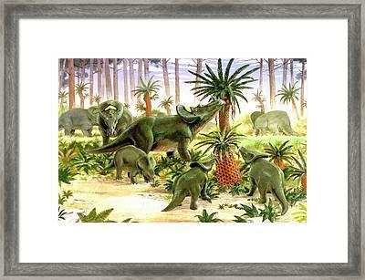 Brachyceratops Dinosaurs Framed Print by Deagostini/uig
