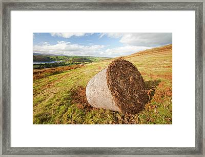 Bracken Being Cut Above Ullswater Framed Print by Ashley Cooper