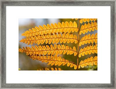 Bracken Fern Framed Print by Linda Freshwaters Arndt