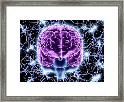 Brain And Nerve Cells Framed Print by Alfred Pasieka