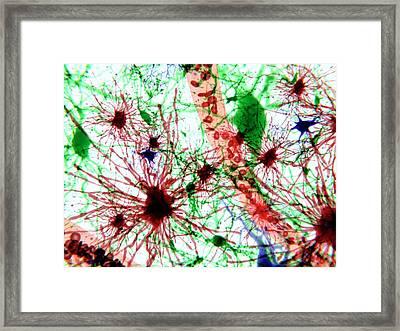 Brain Cells Framed Print by Juan Gaertner