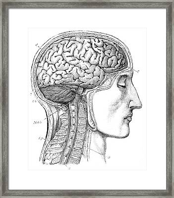 Brain From Right Side, 1883 Framed Print by British Library