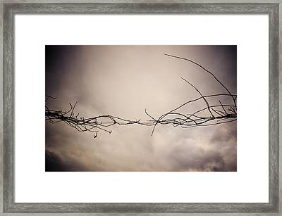 Branches Against A Winter Sky Framed Print by Vivienne Gucwa