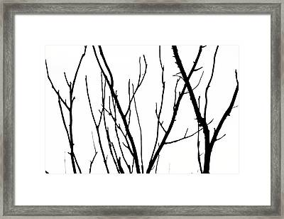 Branches Framed Print by Aidan Moran