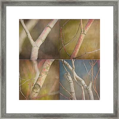 Branches Times Four Framed Print by Bonnie Bruno