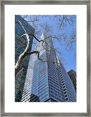 Branching Out Framed Print by Tony Ambrosio