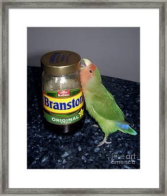 Branston Pickle Framed Print by Terri Waters
