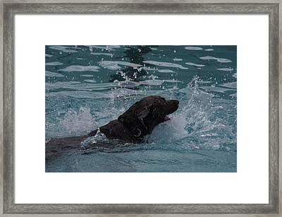 Brauner Framed Print by Klaas