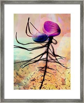 Break Forth Into Joy Framed Print by Shirley Sirois
