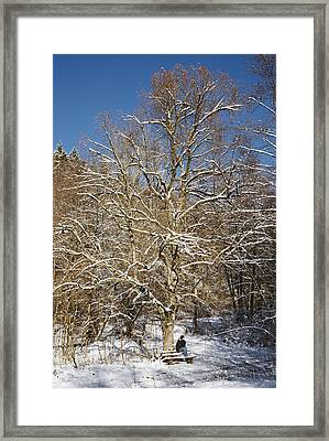 Break Under A Large Tree - Sunny Winter Day Framed Print by Matthias Hauser